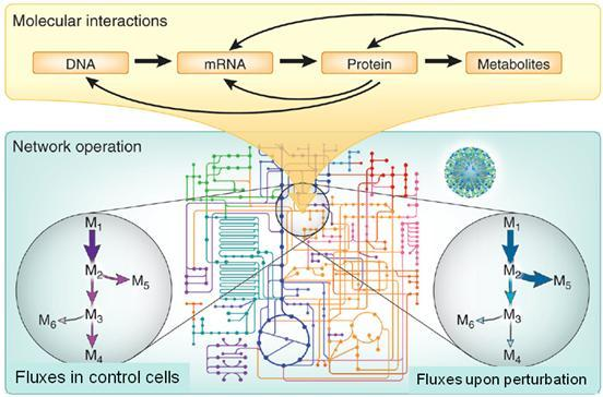 From molecular interactions to a functional network output