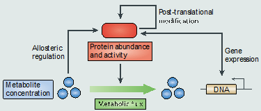 Regulatory and catalytic interactions to be considered for metabolic modeling