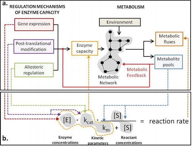 A systems biology view of metabolism and its regulation