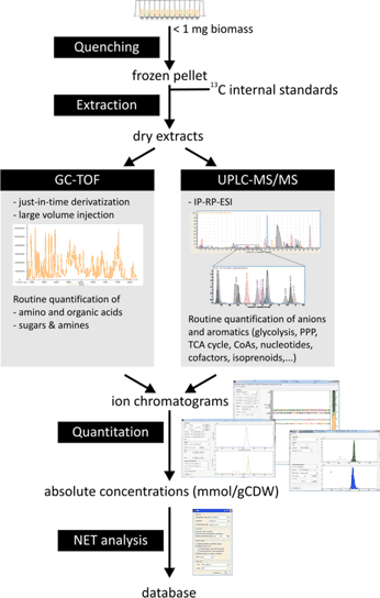 Standard quantitative metabolomics workflow